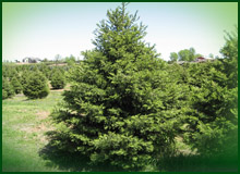 Trees and Shrubs of many different types and sizes